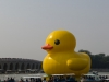 rubber-duck-beijing-2