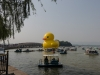 rubber-duck-beijing-3