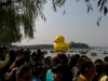 rubber-duck-beijing-4